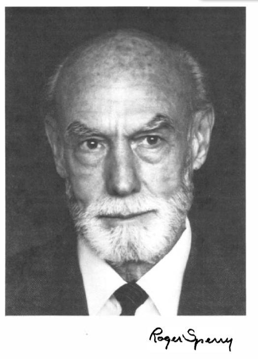 roger sperry Roger wolcott sperry (20 srpna 1913, hartford, connecticut – 17 dubna 1994, pasadena, kalifornie) byl americký neurovědec, neurobiolog a neurofyziolog a zoologv roce 1981 mu byla udělena nobelova cena za odhalení specifické úlohy jednotlivých mozkových hemisfér u člověka.